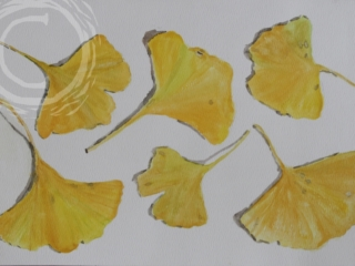 This watercolor is a display of golden ginkgo leaves in strong light.